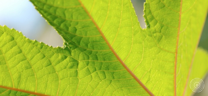 natuurlijk een senso gietvloer is de enige natuurlijke gietv